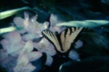 The_garden_dissolves_into_air_2